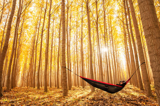 Man relaxing in a hammock alone in the woods, surrounded by trees with bright autumn colors.