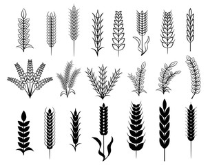 wheat vector set collection clipart silhouette graphic design