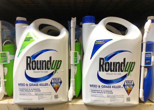 Oakland, CA - August 13, 2018: Garden supply store shelf with containers of RoundUp weed killer. A San Francisco jury just ruled that Roundup gave a former school groundskeeper terminal cancer.