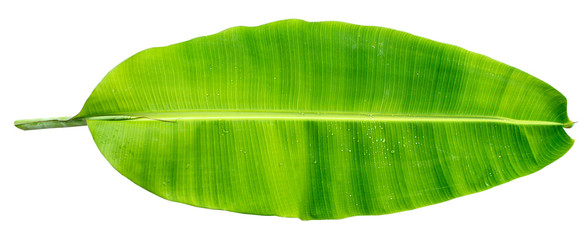 Banana leaf three banana leaves completely separated from the white background