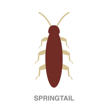 springtail flat icon on white transparent background. You can be used black ant icon for several purposes.