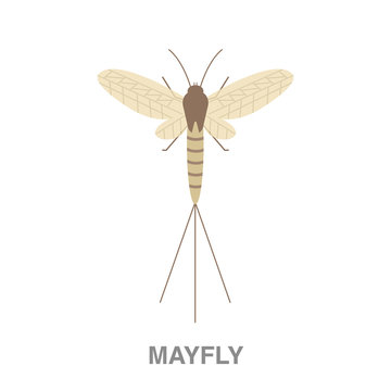 mayfly flat icon on white transparent background. You can be used black ant icon for several purposes.