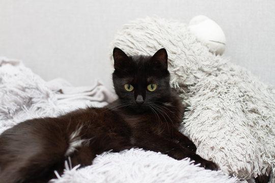 black cat lies on a gray plaid a gray soft toy bear