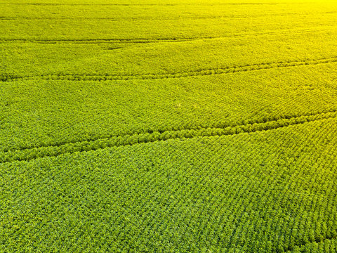 Aerial view of soybean plantation in Paraná