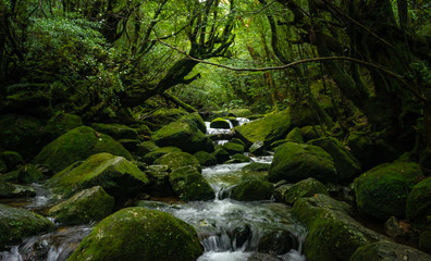 苔むす屋久島 世界遺産屋久島の風景