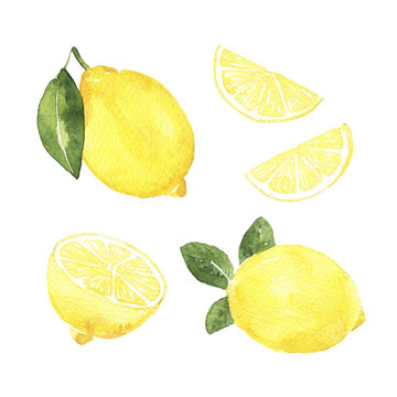 watercolor lemons on the white background. hand drawn isolated illustration