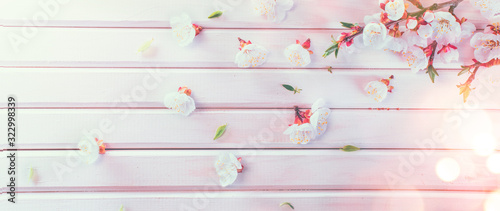Wall mural Easter Spring Blossom on white wooden plank background. Easter Apricot flowers on wood, border art design. Pink blooming tree on wood backdrop closeup.