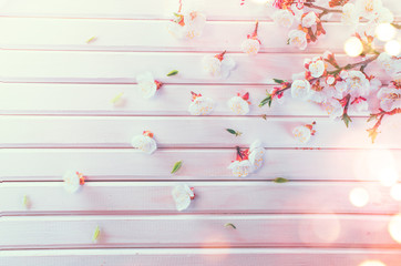 Wall Mural - Easter Spring Blossom on white wooden plank background. Easter Apricot flowers on wood, border art design. Pink blooming tree on wood backdrop closeup.
