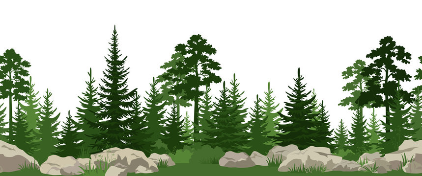Seamless Horizontal Summer Landscape with Green Pine, Fir Trees, Bushes and Grass on the Stones. Vector