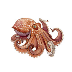 Octopus watercolor painted image. Hand drawn underwater aquatic animal. Wild octopus with eight tentacle single illustration. Beautiful marine creature isolated on white background.