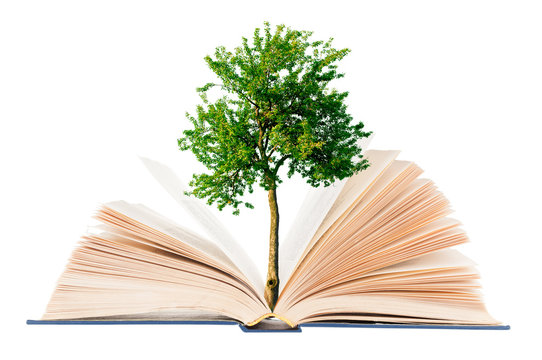 Tree growing from open book on white background