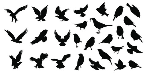 Birds icons set Vector illustration white background Fotobehang