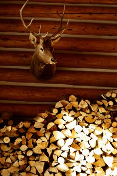 Deer head and wood pile