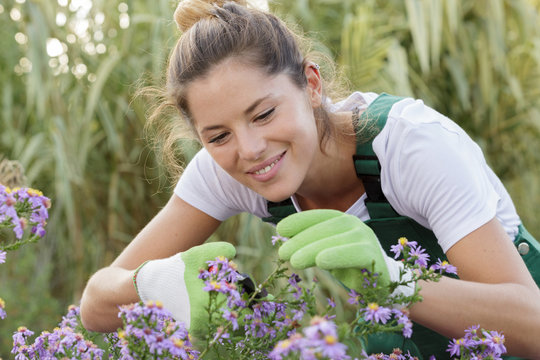 female gardener cutting back flowers