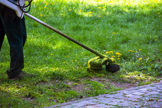 grass trimming work in the park. professional lawn care service using gasoline trimmer in shade of the trees