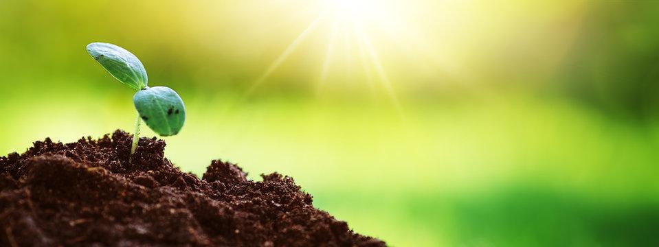Seedlings in the soil on sunny day in the garden in summer