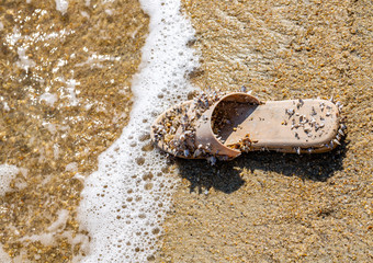 Old beach sandal, washed-up stranded, covered with seashells on golden beach sand closeup
