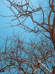 dry tree over blue sky