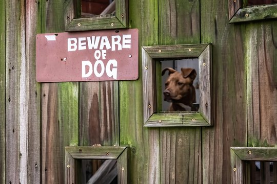 Beware of Dog behind the gate looking out