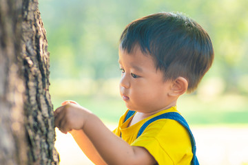 Adorable asian boy playing in tree forest park morning sunrise nature learnning