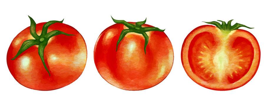 水彩風のトマトのイラストと、断面のイラスト