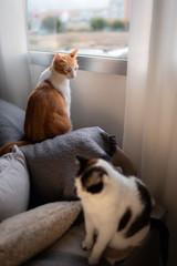 foto vertical. gato blanco y marron deja de mirar por la ventana para mirar a un gato blanco y negro en primer plano