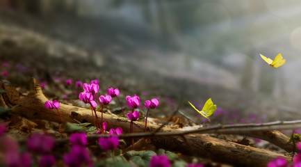 Fototapete - Spring garden nature landscape background with wild Spring flower and fly butterfly; Colorful Garden flower.