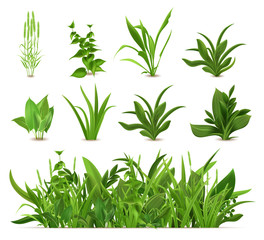 Fototapeta Green realistic spring grass. Fresh plants, garden seasonal growth grass, botanical greens, herbs and leaves vector isolated icons set. Natural lawn meadow bushes, floral vegetation border obraz
