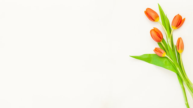 a bouquet of red tulip flowers cut out on white background for copy text flowers bouquet yellow green fresh spring