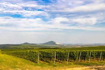 Vineyards near Villany, Baranya, Southern Hungary