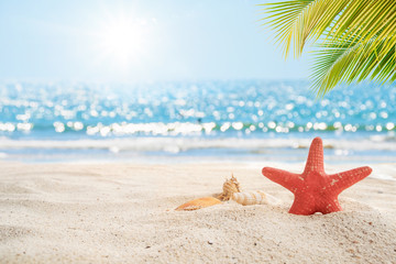 Wall Mural - Beautiful beach background. Star fish, sea shell on white sand with palm tree and blur bokeh light of calm sea and sky. summer vacation background concept.