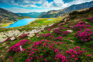 Wall Mural - Flowery fields with pink rhododendrons and mountain lake, Carpathians, Romania
