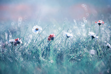 Canvas Prints Floral Wild flower. Little flowers on a green meadow.