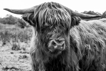 Aluminium Prints Highlander close up in black and white photography