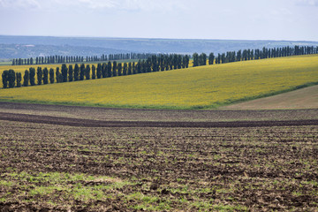 Beautiful summer landscape as like the toscana district.