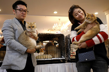 Duy Anh and Quyn Mai hold their cats during the Vietnam's first cat show in Hanoi