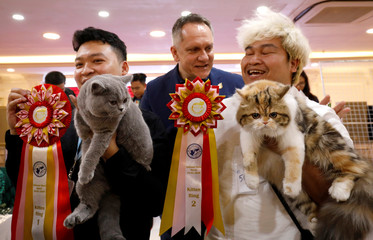 Vice chairman of World Cat Federation Albert Kurkowski presents first title to the cat of Nguyen Xuan Son of Vietnam and second title to the cat of Tawin Prai of Thailand during the Vietnam's first cat show in Hanoi