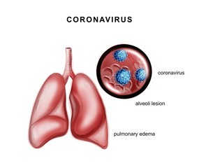 Illustration of the human lungs and coronavirus