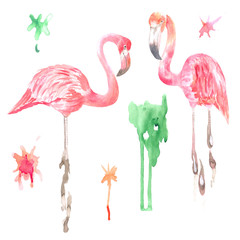 Watercolor scenic flamingos among blots of paint. Great for designing cards, invitations, textiles, souvenirs, photo albums, web sites and other creative projects.