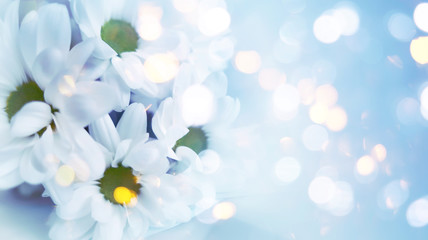 Delicate blurred floral background. Spring flowers close-up, blurry lights