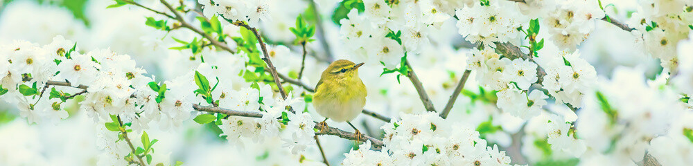 Photo sur cadre textile Oiseau Horizontal nature banner. Spring nature background.