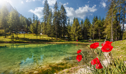 Fotomurales - Beautiful natural landscape in the summer time. Italian Dolomites alps- view on the lake Scin with Red Poppy Flowers on Foreground. Beautiful landscape of alpine lake with crystal clear water.