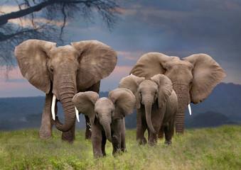 Papiers peints Elephant Afrikanische Elefant (Loxodonta africana) mit Jungtieren von vorne, Kenia, Ostafrika