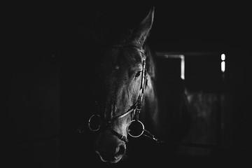 Black horse, black wild horse in stable portrait of a horse, black and white Papier Peint