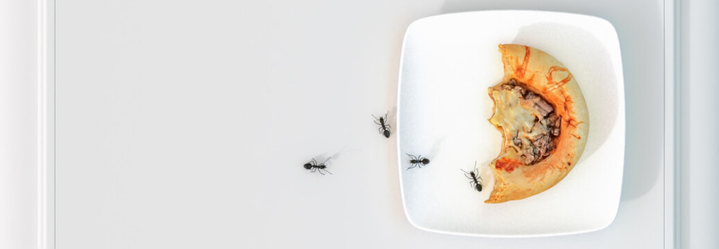 group of ants and a cake nibbled