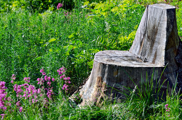 Seat made from tree stump