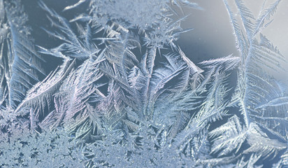 Papiers peints Pissenlits et eau frost crystal on window glass in winter season