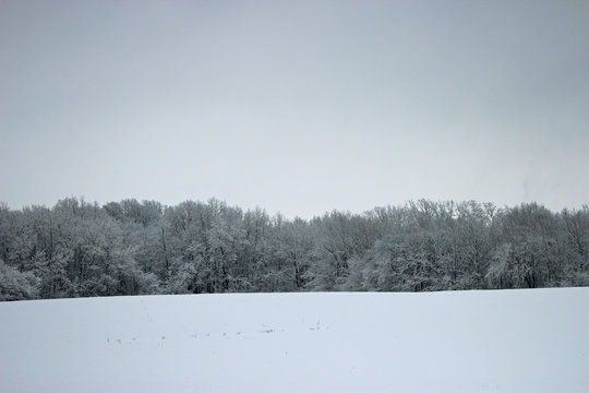 winter rural landscape with snowy trees and snow
