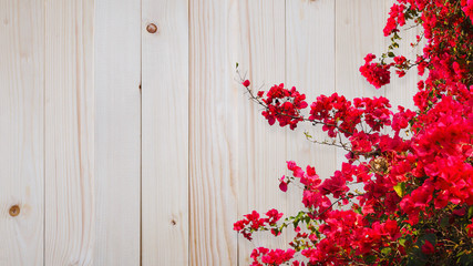 Wall Mural - Red bougainvillea flower over wood background.