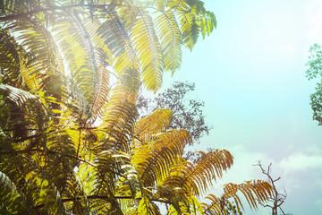 Fern on Hawaii